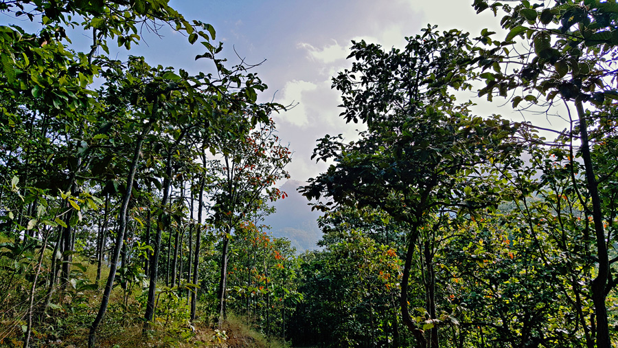 VIew of the Doi Ngum between trees