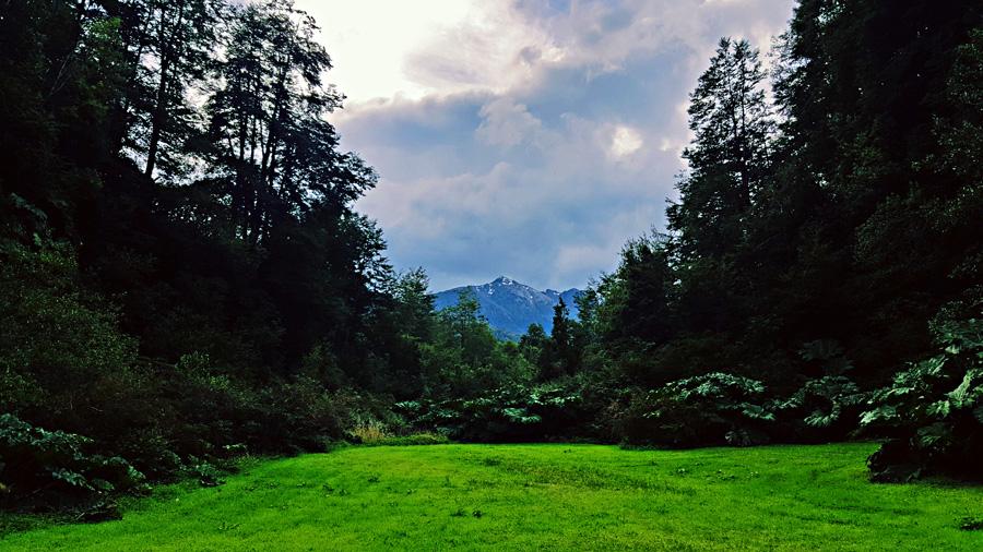 As you walk through the Pumalin Park